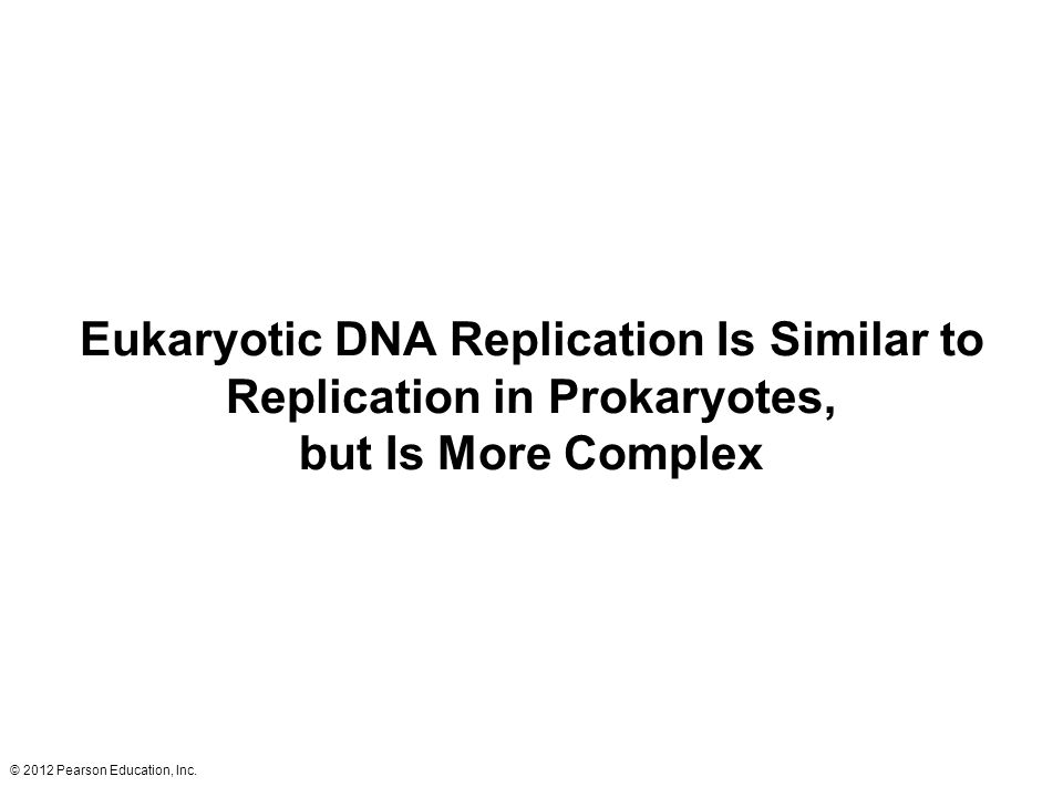 Eukaryotic DNA Replication Is Similar to Replication in Prokaryotes, but Is More Complex
