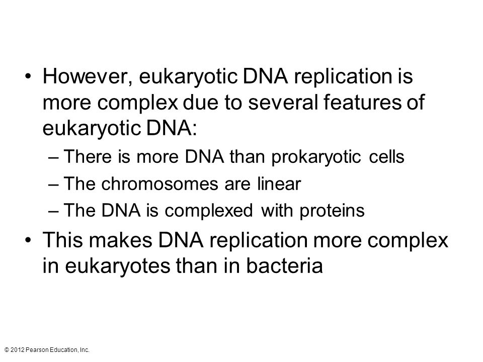 This makes DNA replication more complex in eukaryotes than in bacteria