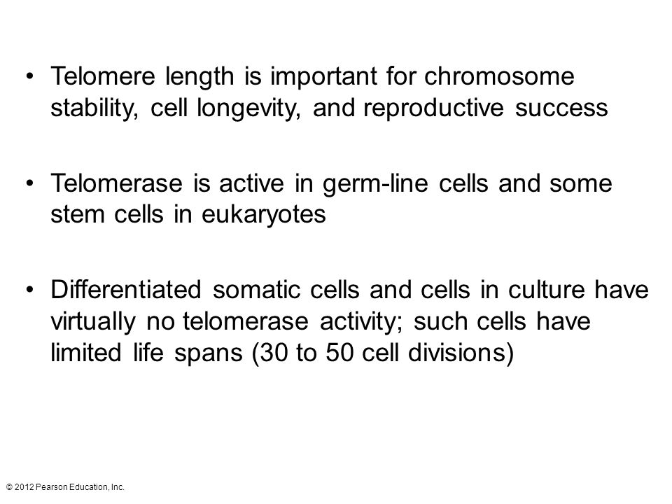 Telomere length is important for chromosome stability, cell longevity, and reproductive success