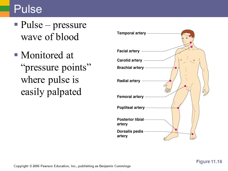 Pulse Pulse – pressure wave of blood