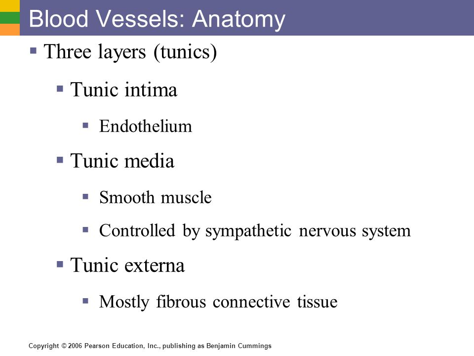 Blood Vessels: Anatomy