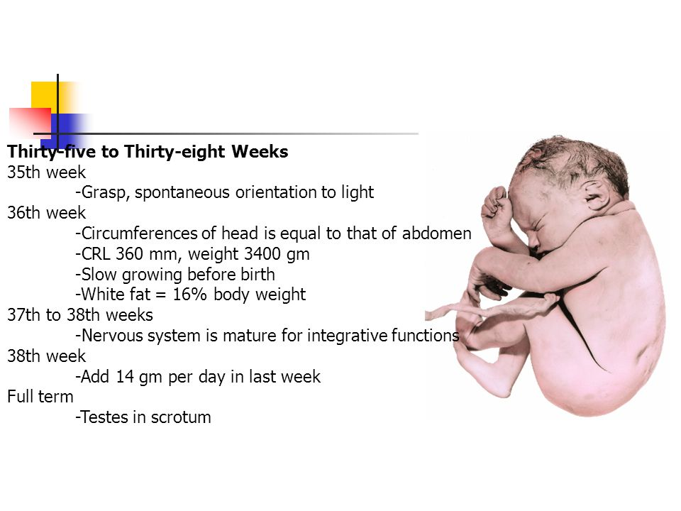 Thirty-five to Thirty-eight Weeks