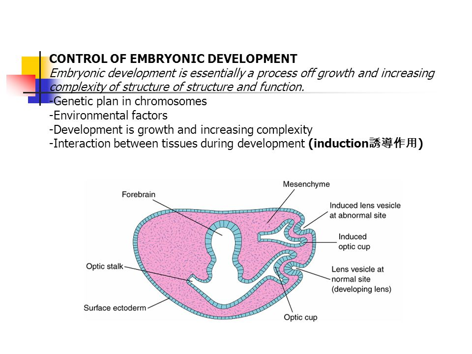 CONTROL OF EMBRYONIC DEVELOPMENT