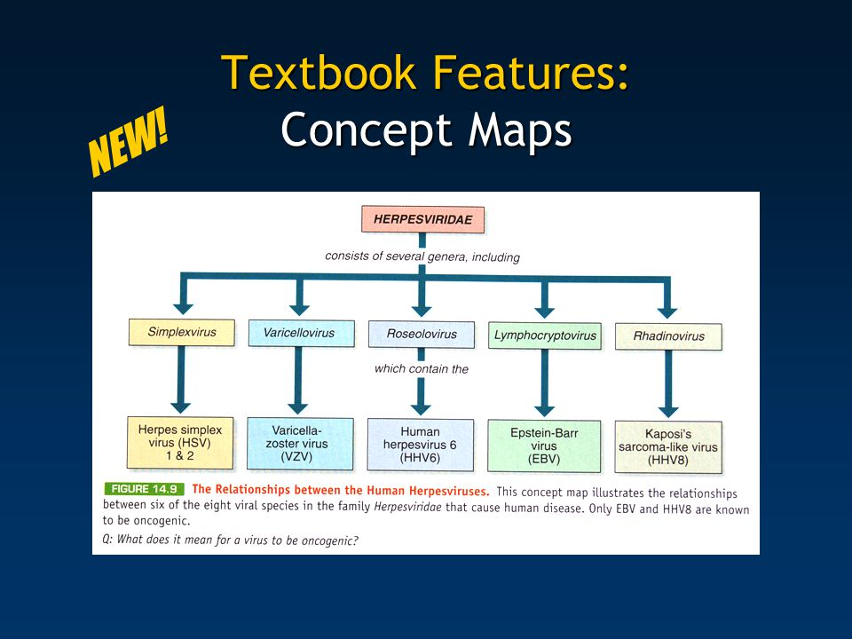 Textbook Features: Concept Maps