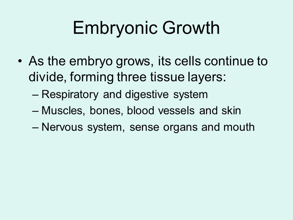 Embryonic Growth As the embryo grows, its cells continue to divide, forming three tissue layers: Respiratory and digestive system.