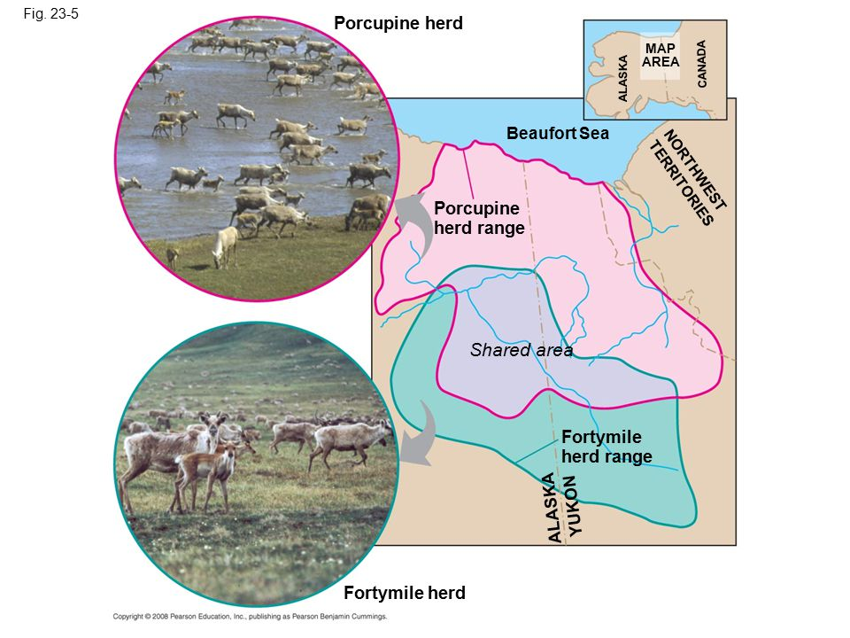 Shared area Porcupine herd Porcupine herd range Fortymile herd range