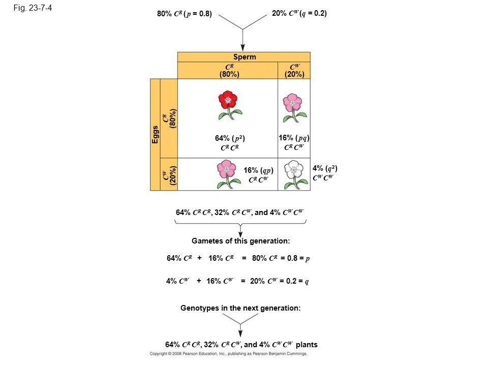 Figure 23.7 The Hardy-Weinberg principle