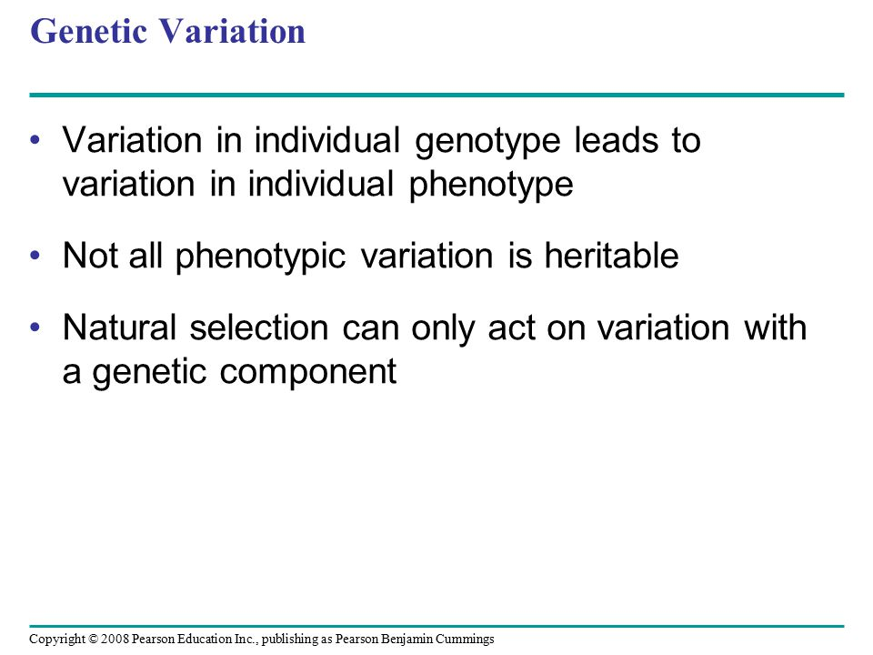 Genetic Variation Variation in individual genotype leads to variation in individual phenotype. Not all phenotypic variation is heritable.