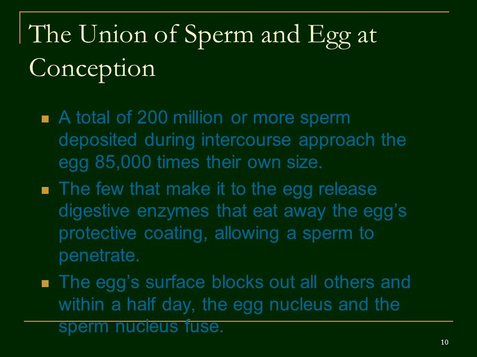 The Union of Sperm and Egg at Conception