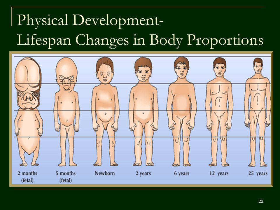 Physical Development- Lifespan Changes in Body Proportions