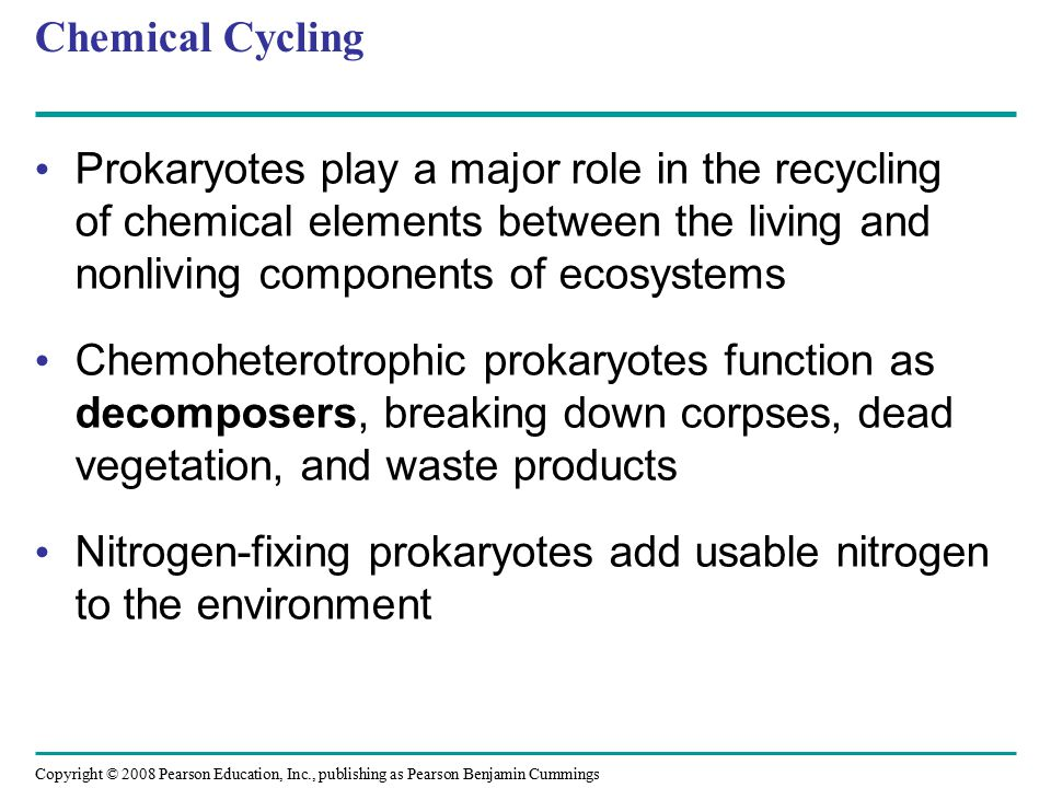 Chemical Cycling Prokaryotes play a major role in the recycling of chemical elements between the living and nonliving components of ecosystems.