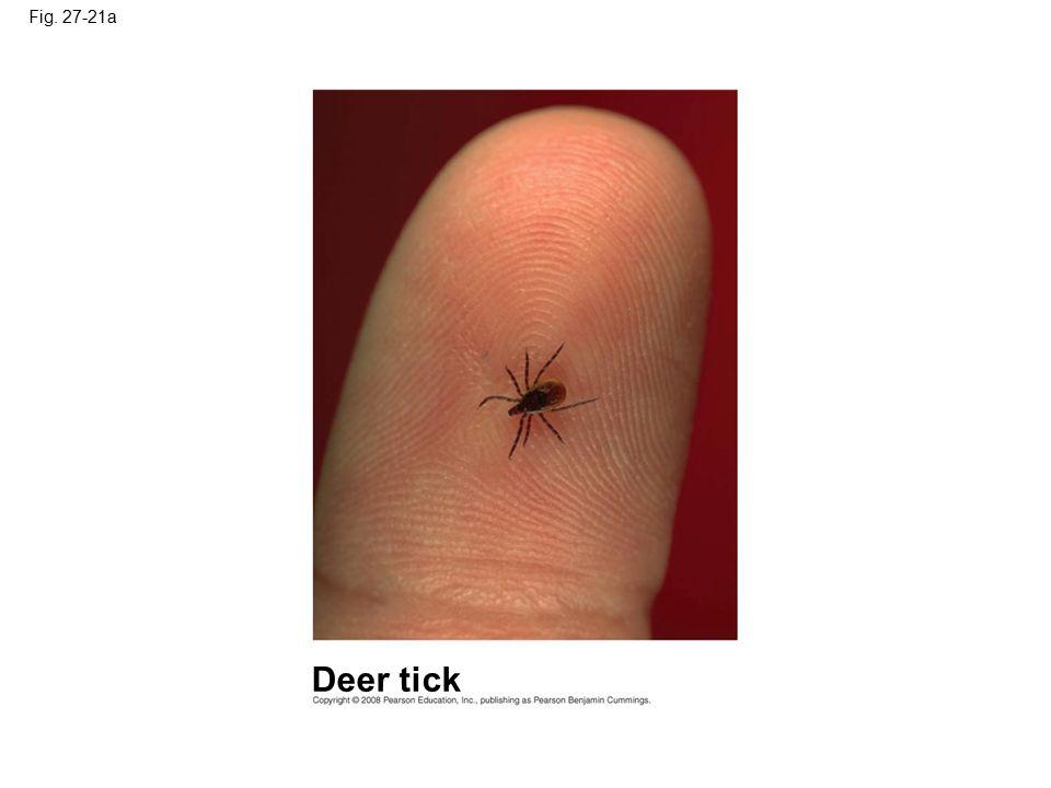 Fig. 27-21a Figure 27.21 Lyme disease Deer tick