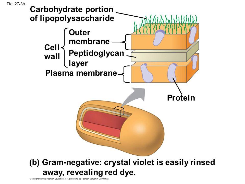 of lipopolysaccharide