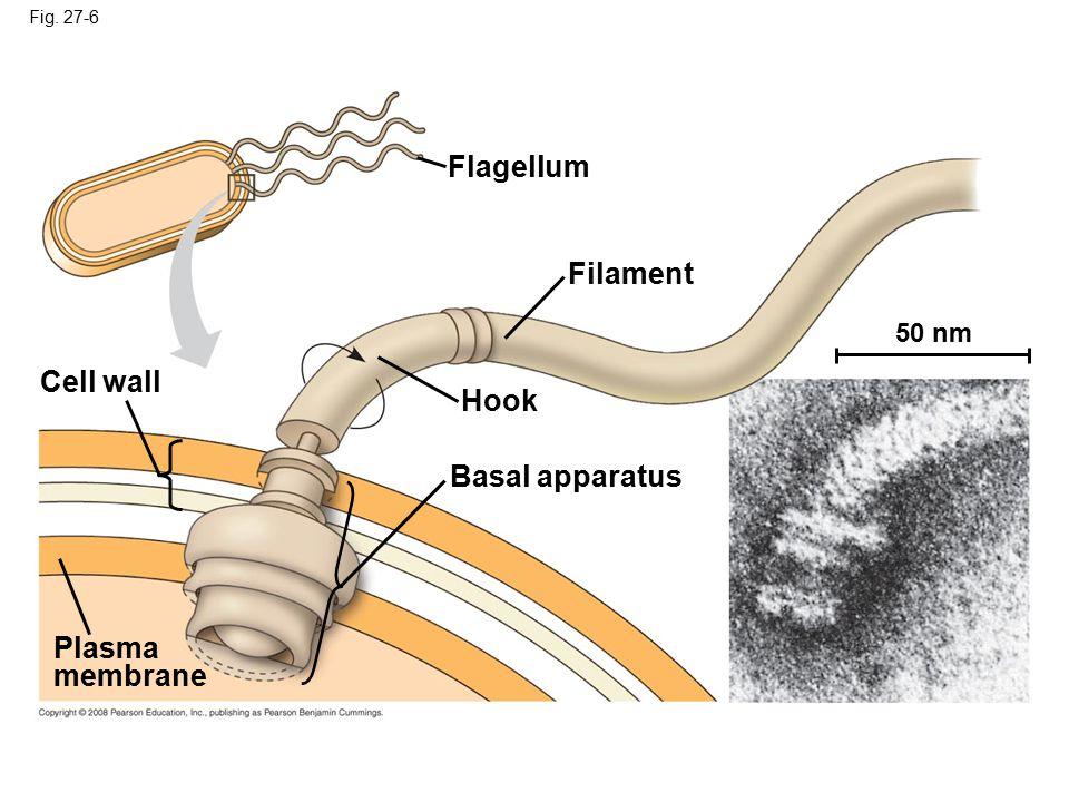 Flagellum Filament Cell wall Hook Basal apparatus Plasma membrane