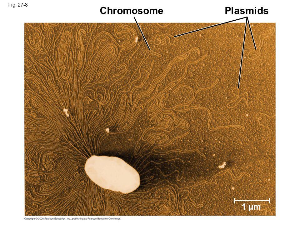 Chromosome Plasmids 1 µm Fig. 27-8