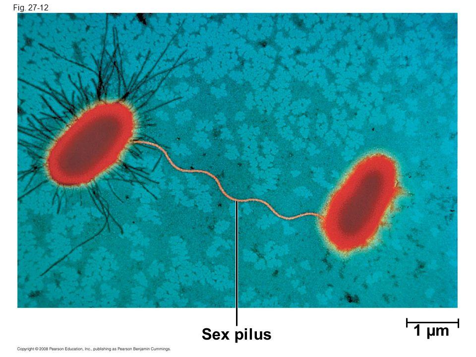 Fig. 27-12 Figure 27.12 Bacterial conjugation 1 µm Sex pilus