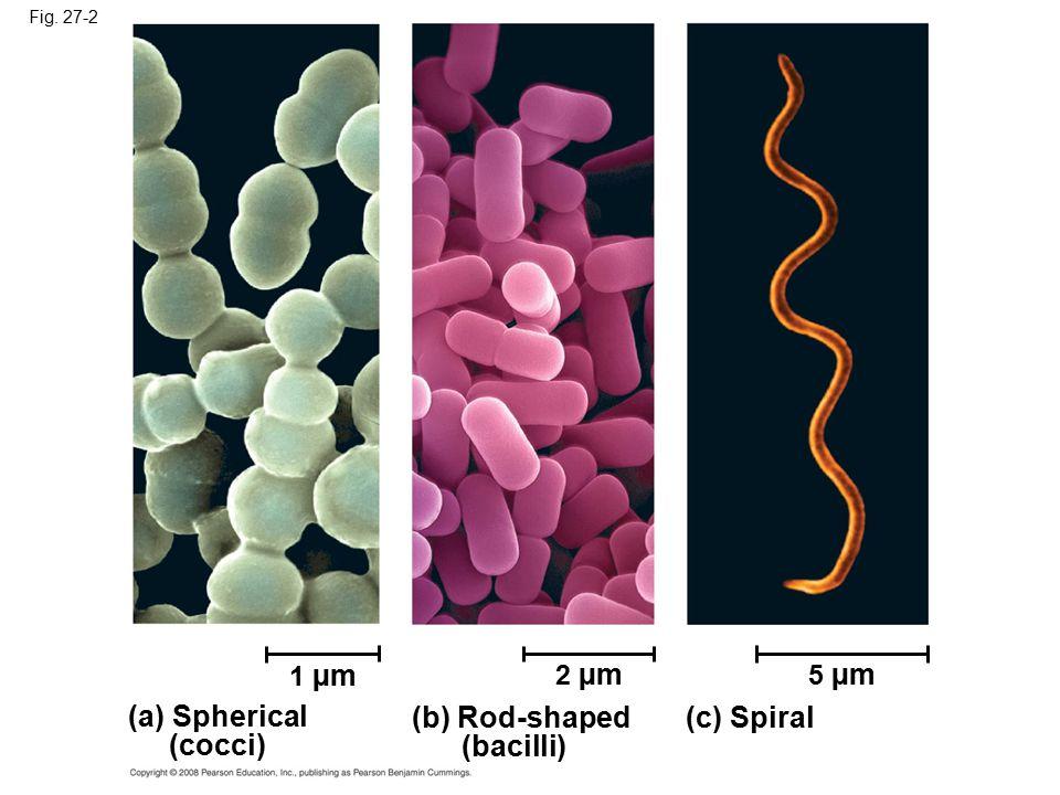(a) Spherical (cocci) (b) Rod-shaped (bacilli) (c) Spiral 1 µm 2 µm