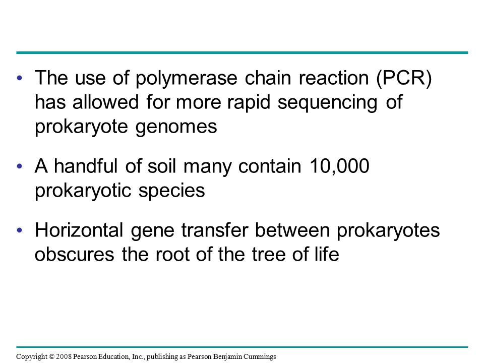 The use of polymerase chain reaction (PCR) has allowed for more rapid sequencing of prokaryote genomes