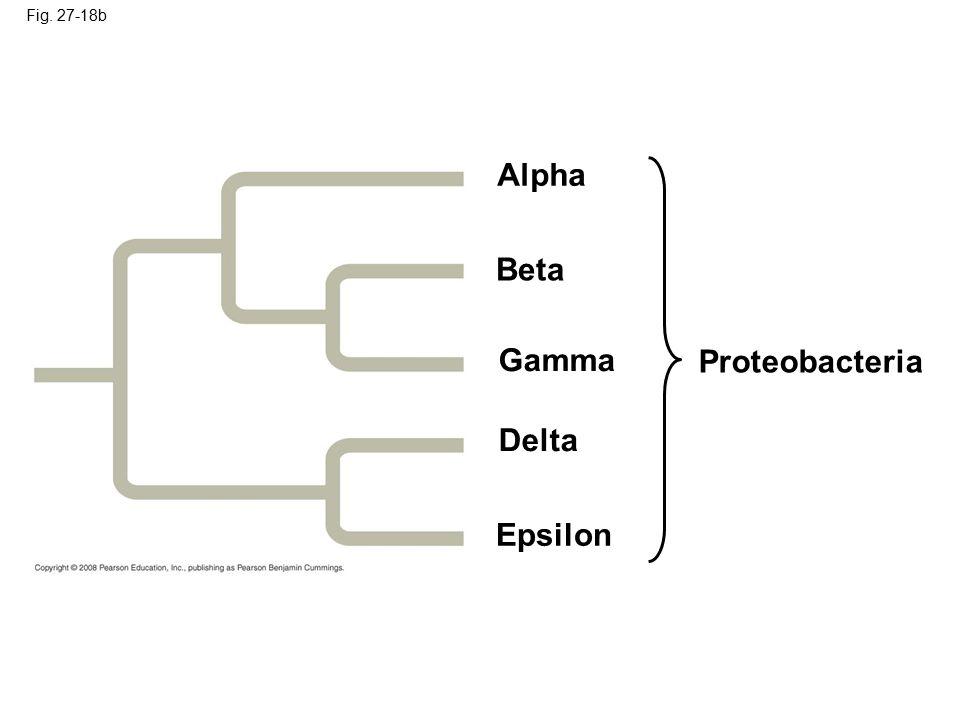 Alpha Beta Gamma Proteobacteria Delta Epsilon Fig. 27-18b