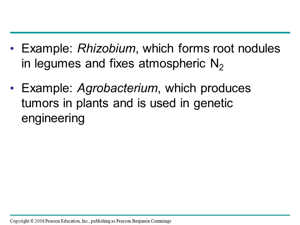 Example: Rhizobium, which forms root nodules in legumes and fixes atmospheric N2
