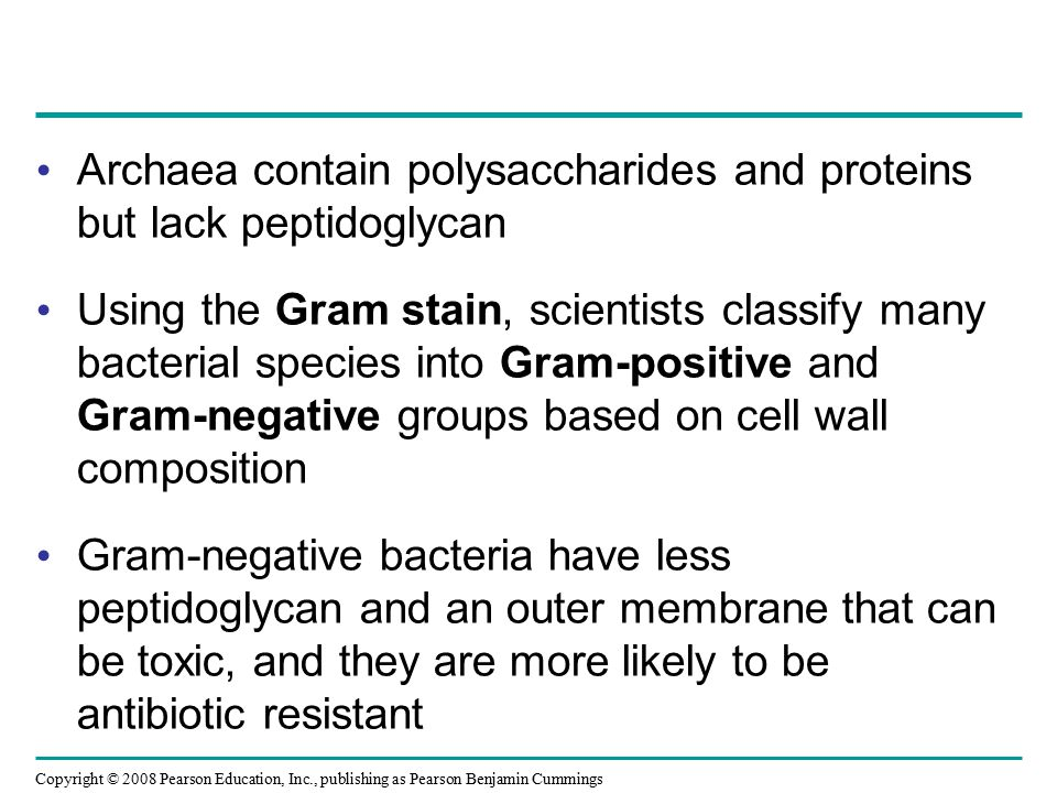 Archaea contain polysaccharides and proteins but lack peptidoglycan