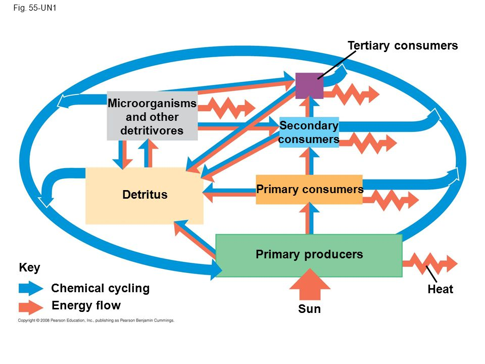Tertiary consumers Detritus Primary producers Key Chemical cycling