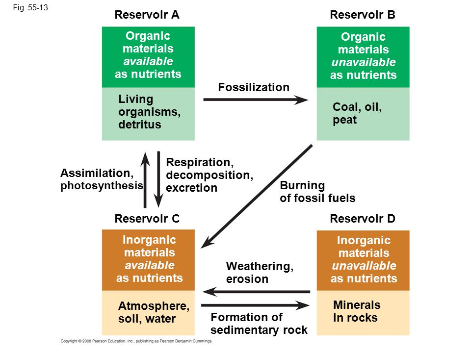 Reservoir A Reservoir B Organic materials available as nutrients
