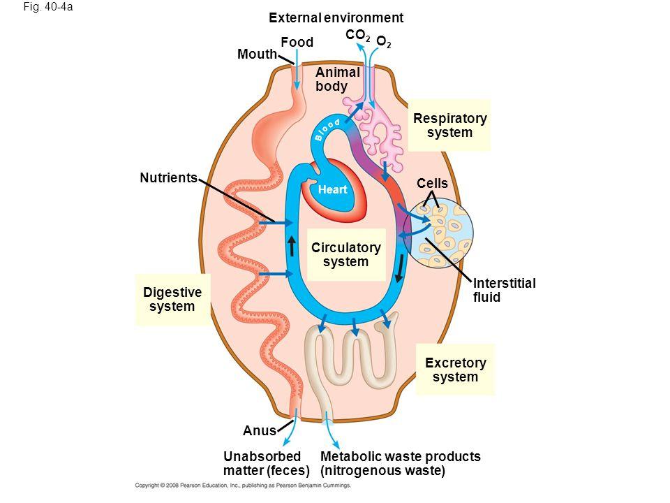 Metabolic waste products (nitrogenous waste)
