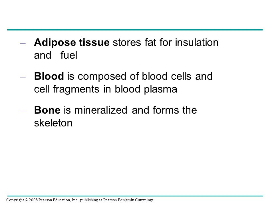 Adipose tissue stores fat for insulation and fuel