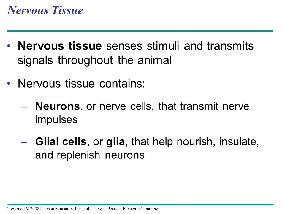 Nervous tissue contains: