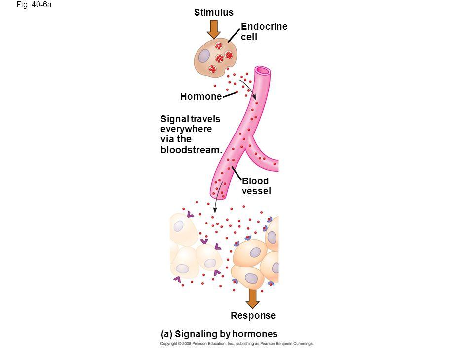 cell via the bloodstream. Stimulus Endocrine Hormone Signal travels