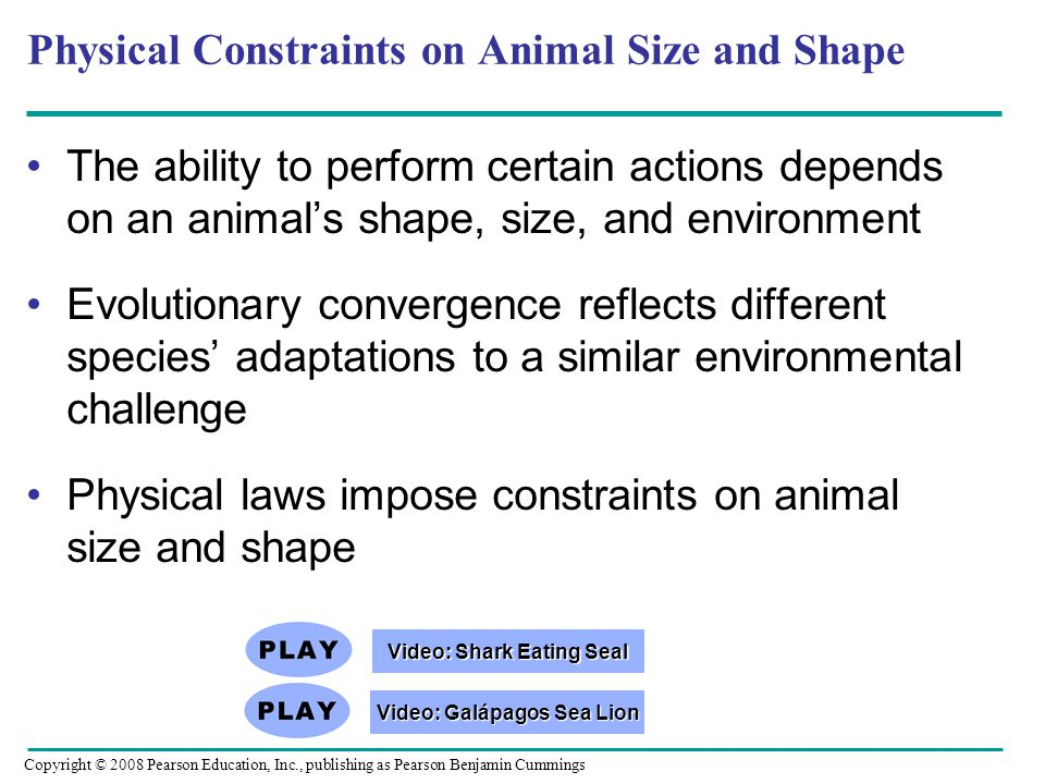 Physical Constraints on Animal Size and Shape