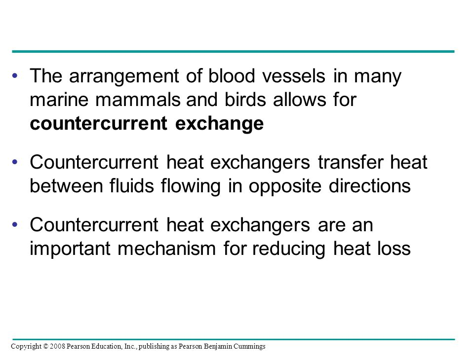 The arrangement of blood vessels in many marine mammals and birds allows for countercurrent exchange