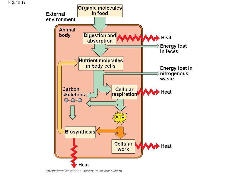 Organic molecules in food External environment Animal body