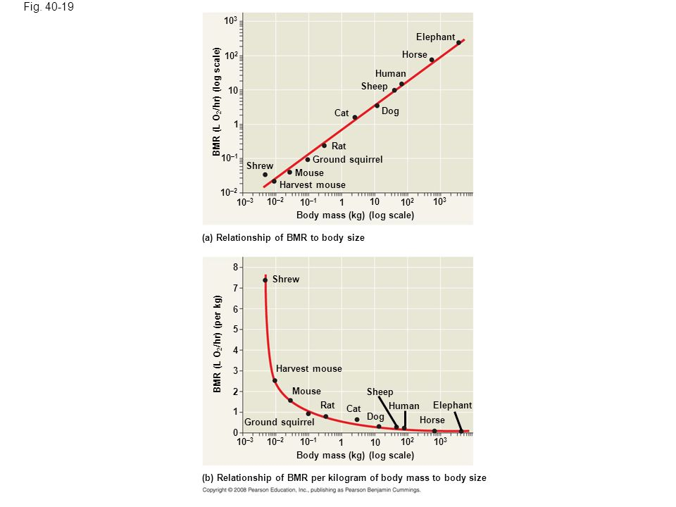 Figure 40.19 The relationship of metabolic rate to body size