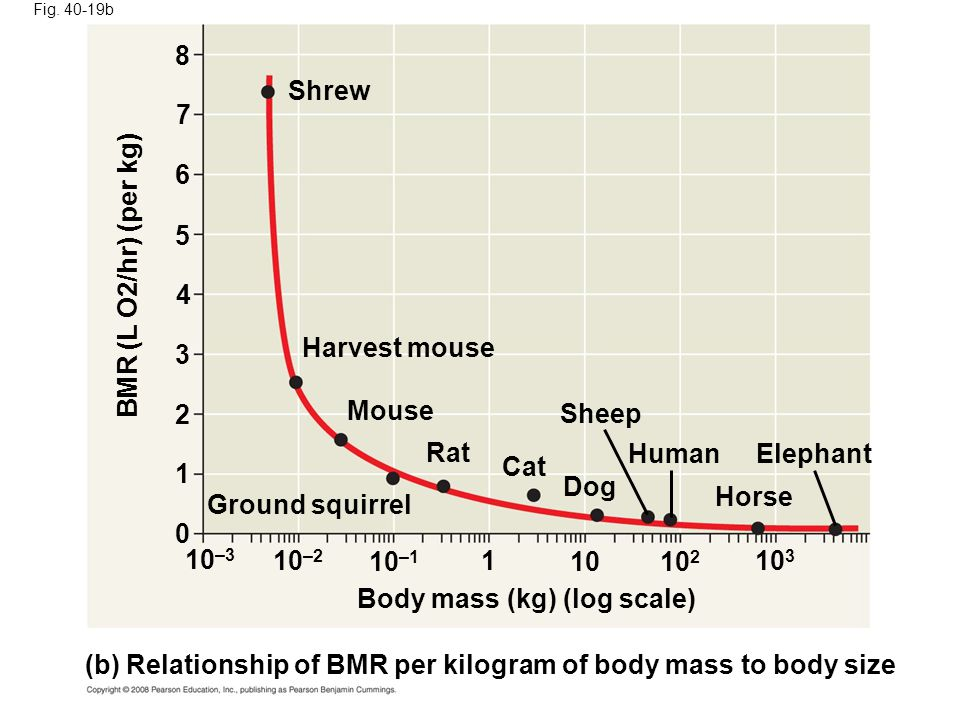 Body mass (kg) (log scale)
