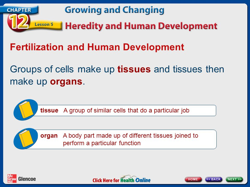 Fertilization and Human Development