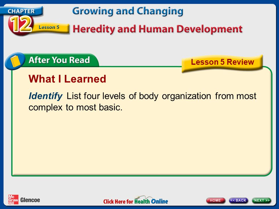 Lesson 5 Review What I Learned. Identify List four levels of body organization from most complex to most basic.