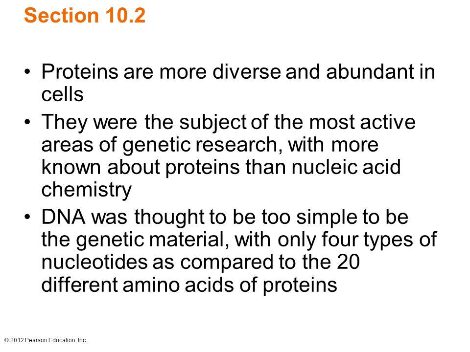 Proteins are more diverse and abundant in cells