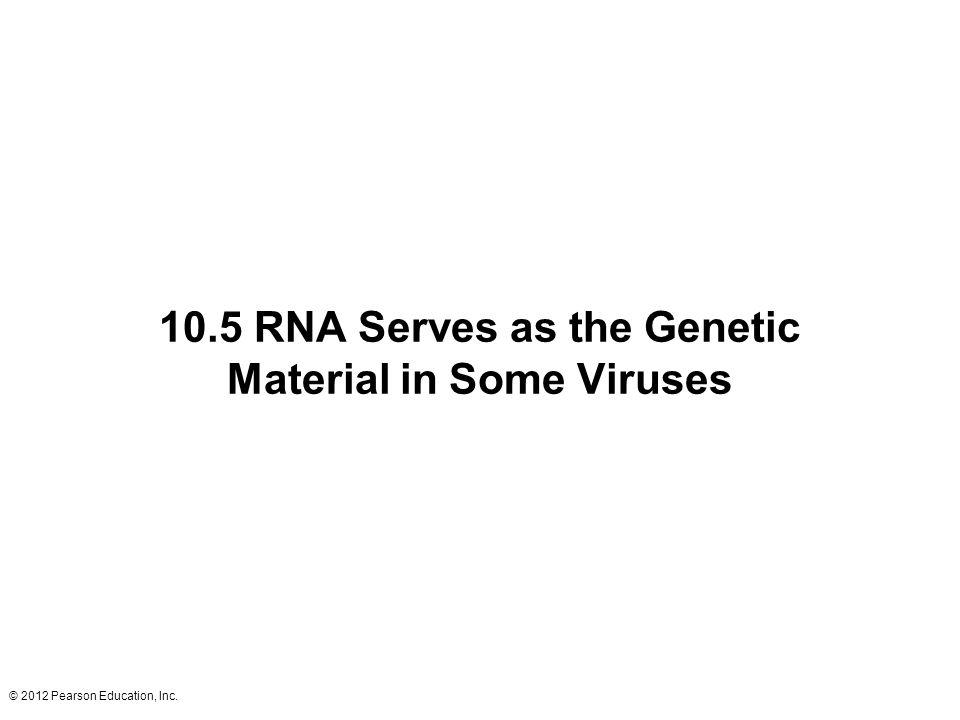 10.5 RNA Serves as the Genetic Material in Some Viruses