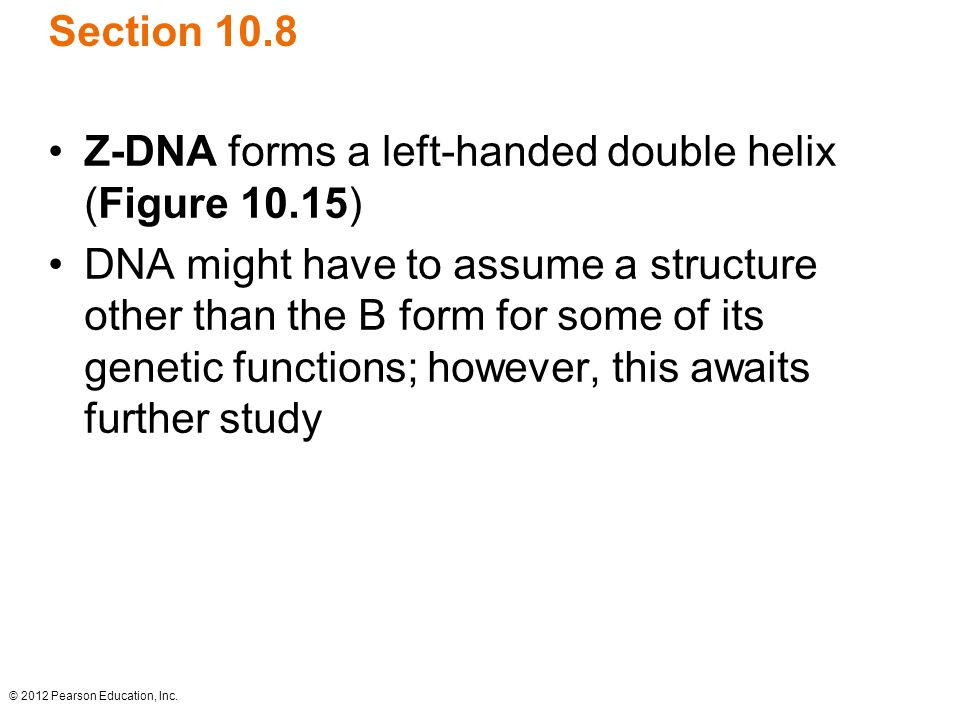 Z-DNA forms a left-handed double helix (Figure 10.15)
