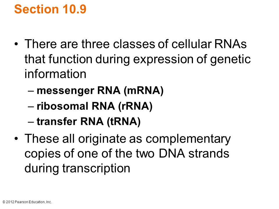 Section 10.9 There are three classes of cellular RNAs that function during expression of genetic information.