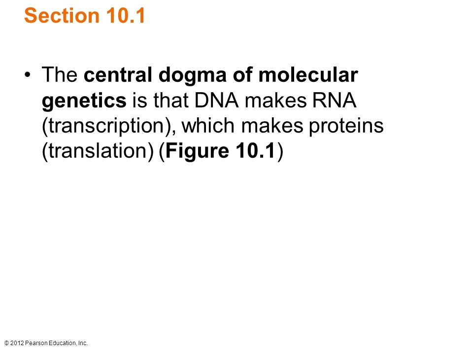 Section 10.1 The central dogma of molecular genetics is that DNA makes RNA (transcription), which makes proteins (translation) (Figure 10.1)