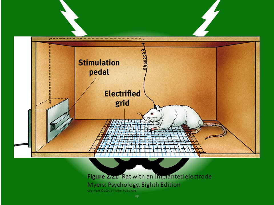 Figure 2.21 Rat with an implanted electrode Myers: Psychology, Eighth Edition Copyright © 2007 by Worth Publishers