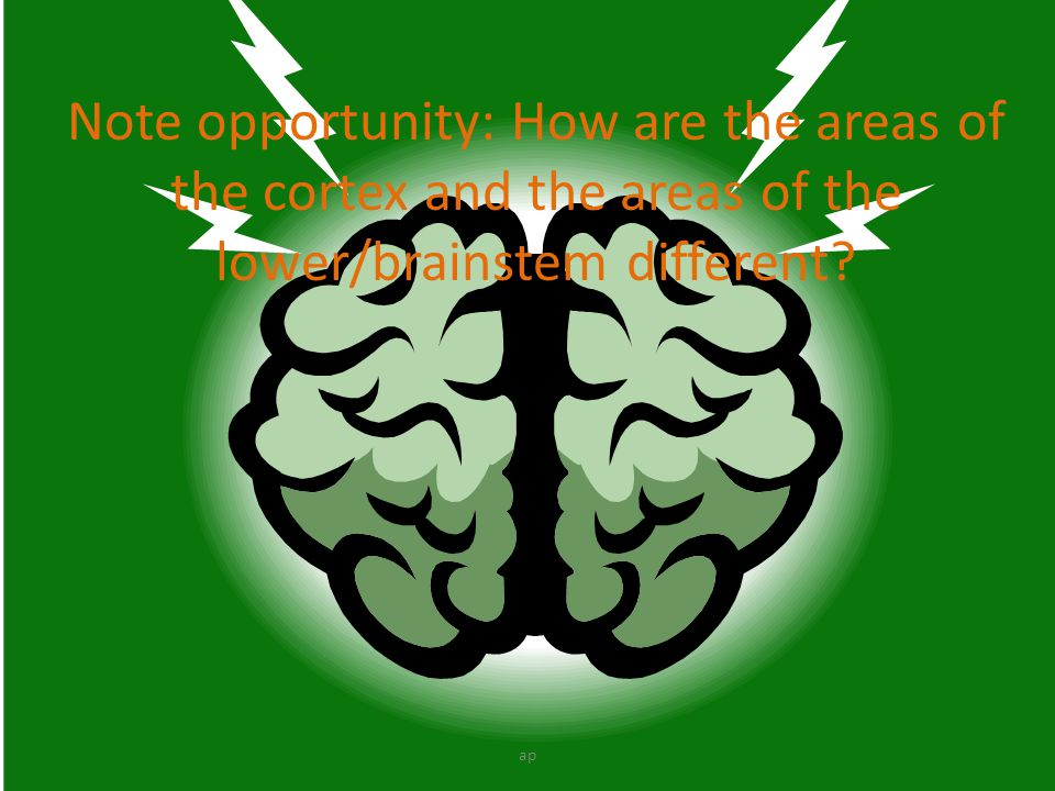 Note opportunity: How are the areas of the cortex and the areas of the lower/brainstem different
