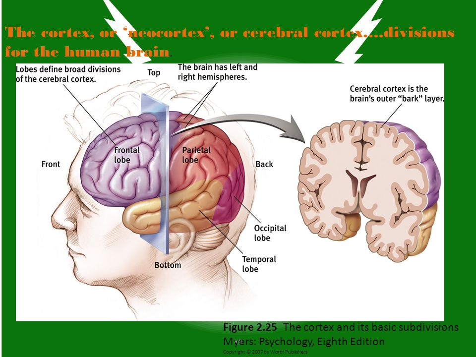 The cortex, or 'neocortex', or cerebral cortex…