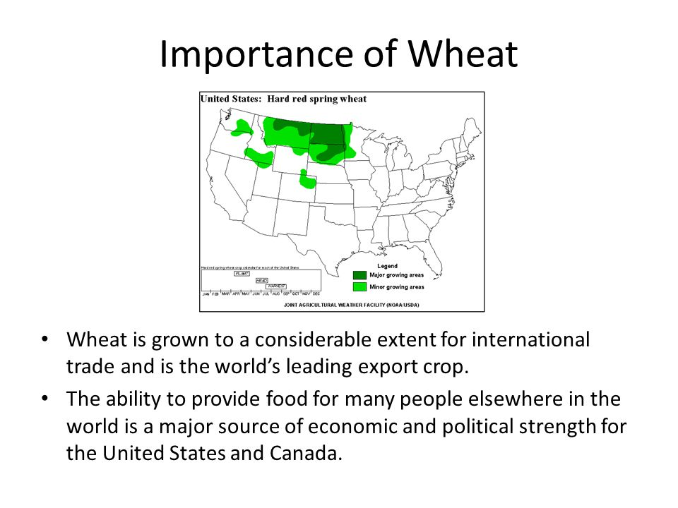 Importance of Wheat Wheat is grown to a considerable extent for international trade and is the world's leading export crop.