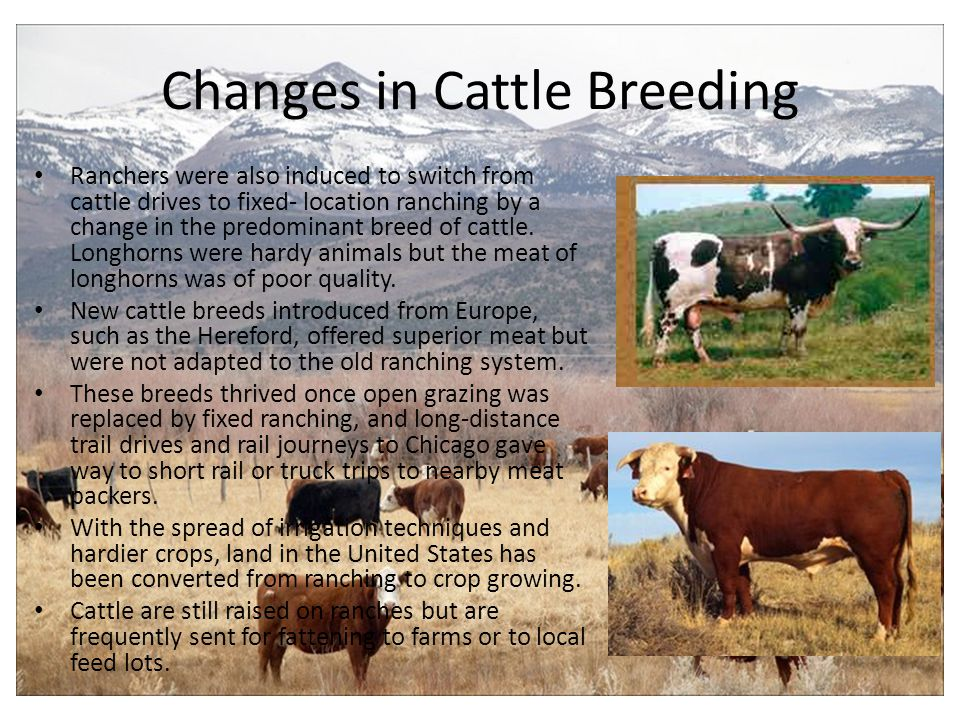Changes in Cattle Breeding