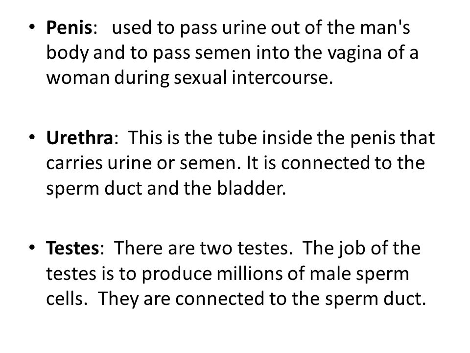 Penis: used to pass urine out of the man s body and to pass semen into the vagina of a woman during sexual intercourse.