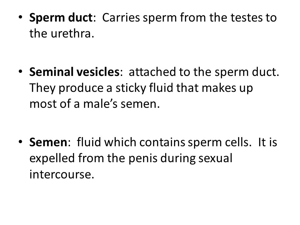 Sperm duct: Carries sperm from the testes to the urethra.